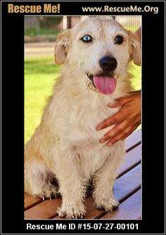 - Survivor Tails Animal Rescue - BOSTON, MA Rescue Animals Dog Pounds, Animal Rescue, Pet Adoption, Boston, Dogs, Animaux, Animal Welfare, Pet Dogs, Doggies