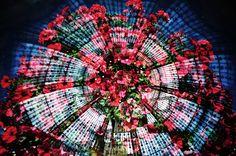 Fotografia analógica de Jardin du Luxembourg + Galeries Lafayette em Paris por Jorge Sato. | Analog photography of Jardin du Luxembourg + Galeries Lafayette in Paris by Jorge Sato.