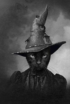 Black Cat Witch - The Cat in the Magical Hat. Chat Halloween, Halloween Images, Halloween Ideas, Halloween Black Cat, Halloween Horror, Vintage Witch, Vintage Halloween, Crazy Cat Lady, Crazy Cats