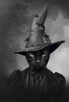 The Cat in the Magic Hat. Adrian Higgins