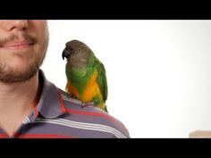 How to Potty Train Your Parrot | Parrot Training - YouTube