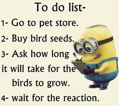 Bird Seed.