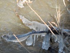 ICE CYCLES IN ICY WATER- PHOTO BY RHODA ELLEN STEVENS BOUNDS