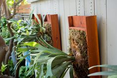 See the world through plants. Learn how to garden indoors and out — from backyard fruit trees to houseplants. Farm Gardens, Garden Farm, Staghorn Plant, Platycerium, Epiphyte, Tropical Garden, Leaf Shapes, Fruit Trees, Air Plants
