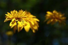 Free high quality images you can use anywhere - Timapa High Quality Images, Graphic Illustration, Sunshine, Yellow, Nature, Decor, Naturaleza, Decoration, Nikko