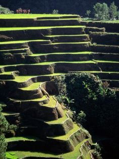 Rice terraces, Ifugao Province, Philippines - was one of the wonders of the world! Banaue, Rice Terraces, Tagalog, Culture, Lonely Planet, Wonders Of The World, Places To See, The Good Place, Travel Photography