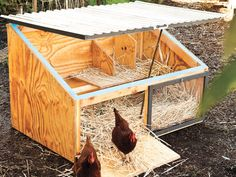 How to Build a Chicken Coop | Sunset