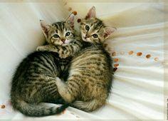 Cuddling...♡♡♡♡