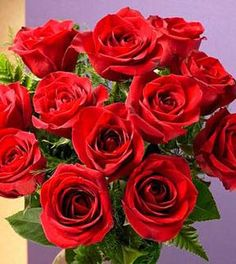 1 Dozen Red Medium Stem Roses - Wrapped