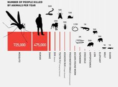Deadliest animals by the number of people they kill each year.