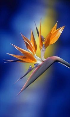 exotic flower , from Iryna