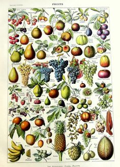 1923 Vintage french  fruit print original  by LyraNebulaPrints, $24.99