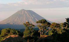 Traumblick auf den Kilimanjaro. Die Tierwelt rund um ihn ist einzigartig. Namibia, Mount Rainier, Safari, Mountains, Places, Nature, Travel, Feral Cats, Round Trip
