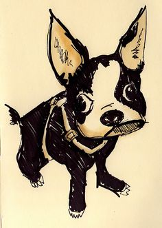 Boston Terrier...    Source: infpsoup