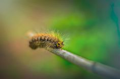 Caterpillar by Vani N on 500px, 97.1, CameraNIKON D5100 Focal Length50mm Shutter Speed1/250 s Aperturef/2.5 ISO/Film100 CategoryMacro Uploaded1 day ago TakenJune 28, 2014
