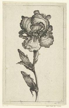 Iris, anoniem, ca. 1630 - voor 1690