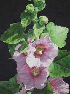 Sun-kissed Hollyhocks - size 16in x 12in - sold