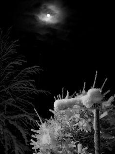 Collection of black and white photography by photographer Satu Ylavaara in years Valokuvaaja Satu Ylävaaran mustavalkoinen valokuvaus.