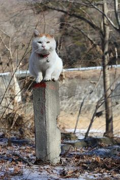 Cat in Japan Crazy Cat Lady, Crazy Cats, Kitten Photos, Japanese Cat, Funny Cute Cats, Cat People, Cute Friends, Beautiful Cats, Cat Breeds