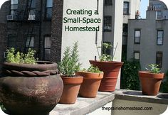 6 steps I've taken to create a small-space homestead / http://www.theprairiehomestead.com/2012/12/how-to-create-a-small-space-homestead.html