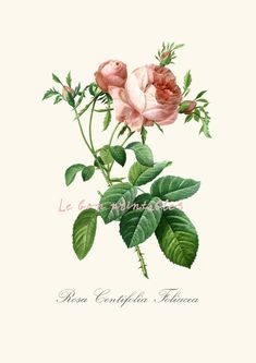 INSTANT DOWNLOAD  Vintage rose printable art door Lebonprintables, €2.00