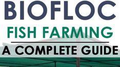 Aquaponics Greenhouse, Hydroponic Gardening, Hydroponics, Tilapia Fish Farming, Farming Guide, Pet Fish, Goat Farming, How To Become Rich, Ranch