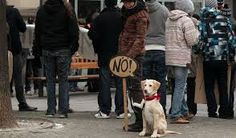 loukanikos - protest dog in New York Cute Dogs, New York, Animals, Dog Stuff, New York City, Animales, Animaux, Animal, Nyc