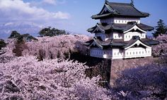 Tohoku - Aomori - Hirosaki city - cherry blossoms