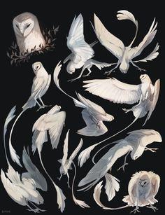 New fantasy bird drawing inspiration ideas Animal Sketches, Animal Drawings, Art Sketches, Art Drawings, Wolf Drawings, Mythical Creatures Art, Mythological Creatures, Creature Concept Art, Creature Design