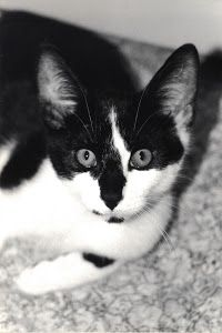 Kitty Kitty by Dennis Begnoche - Photo taken of our cat black and white. Click on the image to enlarge.