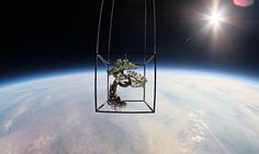 There's life out there: the artist shooting bonsai trees into space:  Azuma Makoto's astonishing extraterrestrial plants are a totally new typ...  http://www.theguardian.com/artanddesign/jonathanjonesblog/2014/jul/22/azuma-makoto-exobiotanica-bonsai-trees-in-space-photography?CMP=EMCARTEML6852