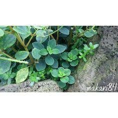 Native Hawaiian Plants (@native_hawaiian_plants) • Instagram photos and videos Hawaiian Plants, Photo And Video, Videos, Photos, Instagram, Pictures