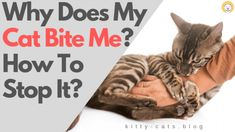 Cats love petting, but sometimes they can show off adverse reactions like biting. So why does my cat bite me? – how to stop it? Kitten Biting, Baby Animals, Funny Animals, Cat Info, Silly Cats, Stop It, Cat Facts, Pretty Cats, Go Outside