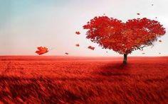 el corazón y nuestro árbol