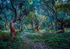 Madeira Portugal Laurel Forest - Bing images