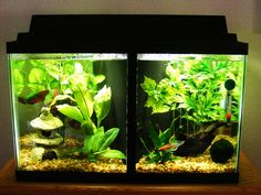 Twenty gallon long a song of ice and fire themed divided for Fish tank ice method
