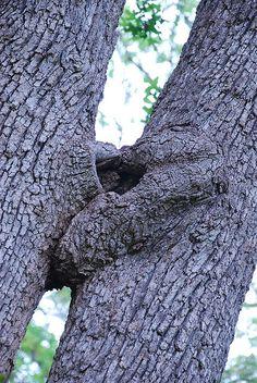 trees kiss