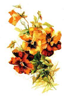Free Vintage Images: Old Fashioned Flower Images
