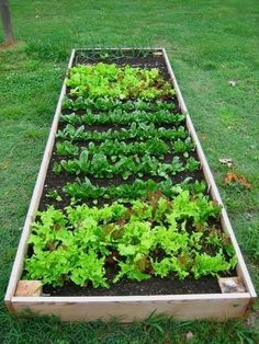 how to build raised vegetable garden ideas home garden tips #creativevegetablegardeningideas #homegardening #gardenideasvegetable