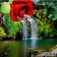 Waterfall w a rose Beautiful Love Pictures, Beautiful Gif, Love Images, Images Gif, Rose Flower Wallpaper, Flowers Gif, Beautiful Rose Flowers, Roses Gif, Gif Bonito