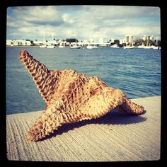 #Miami Journalist Gio Benitez discovered this starfish on a Wednesday (Miami) afternoon. #Starfish #Travel