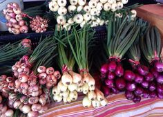 Spring onions. Photo- Sylvia Rubin