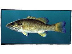 Fishes of Alabama | Encyclopedia of Alabama