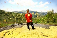 """Caffeine-Fuelled Happiness Ana Castañeda, Peru   """"The juxtaposition of the deforested hills in the background and the glee on the young farmer's face at his bumper crop which could help restore the region to its former glory.""""   http://www.curiousanimal.com/image-day-ana-castaneda/"""