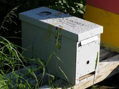 How to make splits & nucs for apiary increases.
