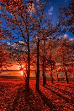 Autumn's Day, sunset painting idea with long shadows.