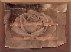 The Starn Brothers. Rose, 1988. http://c4gallery.com/artist/database/mike-&-doug-starn/mike-doug-starn-twins.html