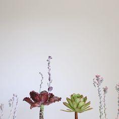 Succulent Reef photo by Dalla Vita.