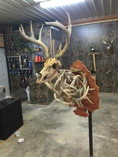 European Deer Antler Mount
