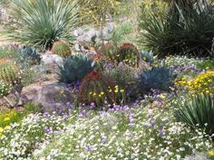 When Is the Best Time to See Wildflowers in Phoenix?: Desert Wildflowers